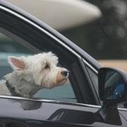 Carpool חוצבים