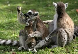 """מנוי לגן החיות התנכ""""י במִנהלת הר-חוצבים: זול יותר, נוח יותר"""