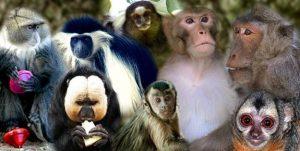 פארק הקופים - תמונה מהאתר